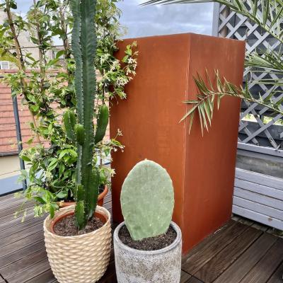 De coration exte rieur avec cactus