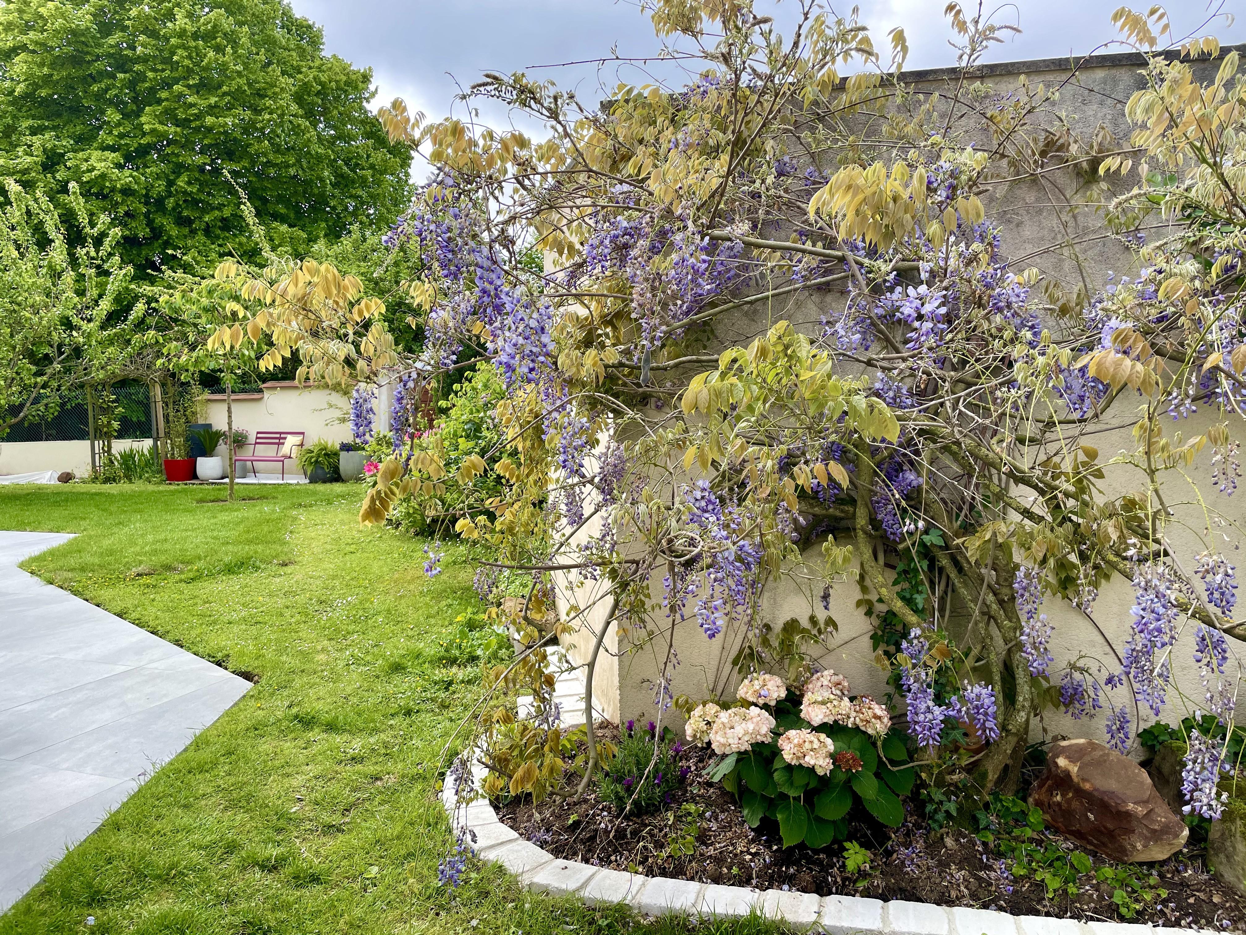 Glycine peggy guezello ame nagement de jardi et terrasse